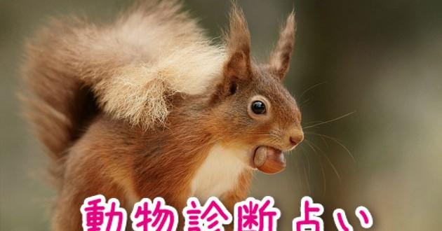 相性占いの動物診断占いサムネイル画像