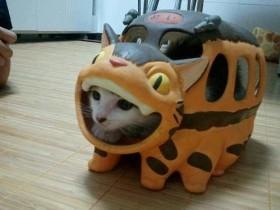 【面白画像】動物編 ver1