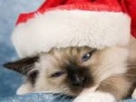 クリぼっち対策!クリスマスの夜に「ひとりでも平気な場所」ランキング サムネ画像